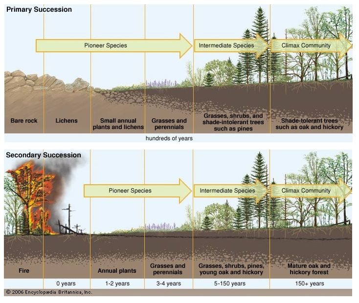 research paper on forest ecology Track accepted paper once production of your article has started, you can track the status of your article via track your accepted article.