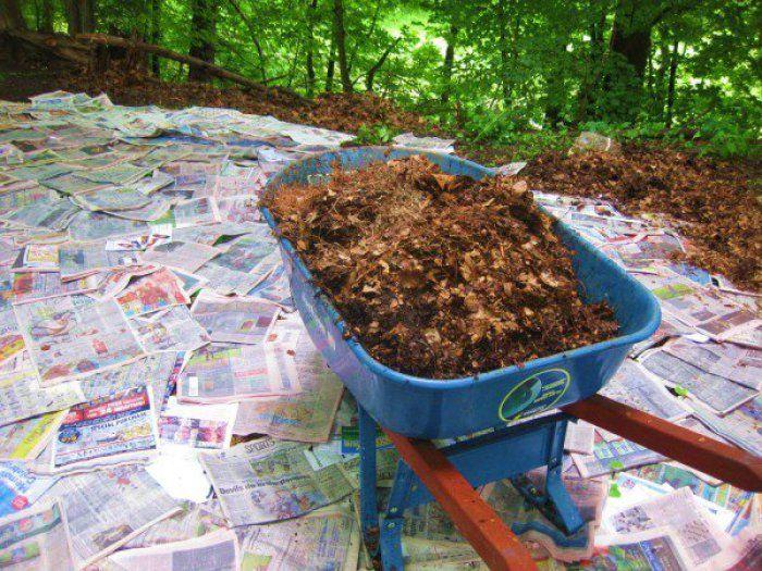 Un truco que te ayudará a acabar con las malas hierbas, sin usar ni herbicidas ni tóxicos.