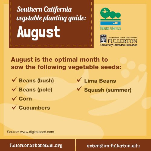 1000 images about socal vegetable planting on pinterest for Vegetable gardening guide