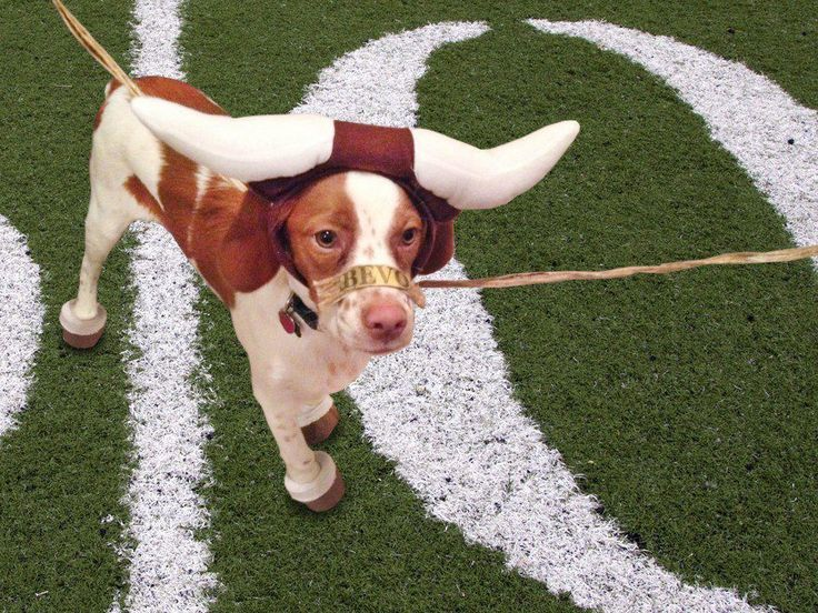 Oh my doghook em dogs dog costume texas longhorns