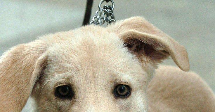 Was ins Hunde-Reisegepäck gehört  Versicherung nicht vergessen Was ins Hunde-Reisegepäck gehört. Soll der Hund mit in den Urlaub, dann ist auch an das nötige Gepäck für das Tier zu denken. Doch welche Utensilien und Unterlagen sollten Hundehalter auf jeden Fall einstecken?