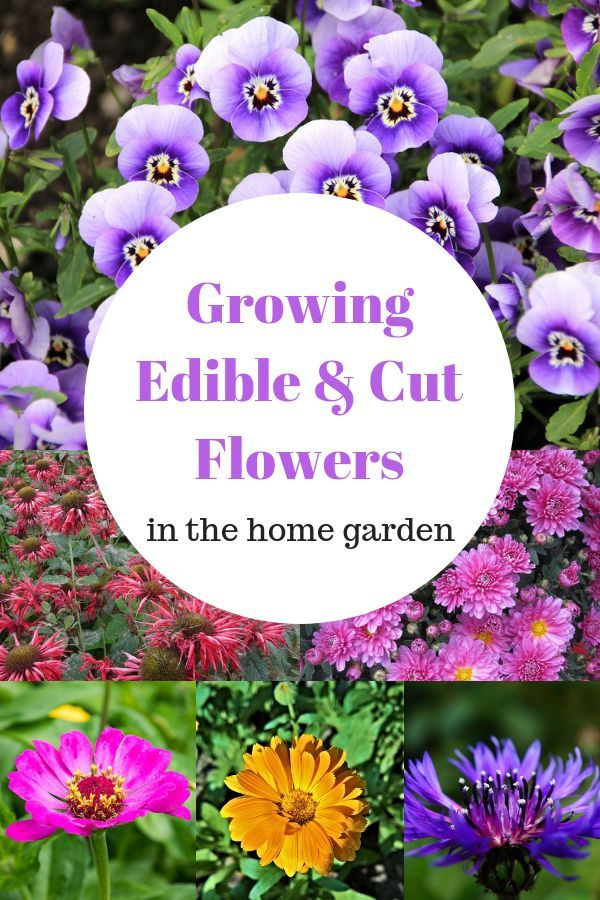 Learn In This Flower Gardening Guide Which Flowers Make Lasting Cut Arrangements And Edible You Can Grow Your Home Garden