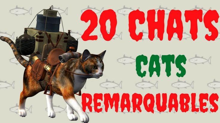 20 chats remarquables, top 20 des races de chats dans le monde, portrait...