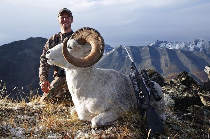 Check out that curl! Beautiful sheep & beautiful photo by Tombstone Outfitters in Yukon, Canada! #DreamSportingTrips