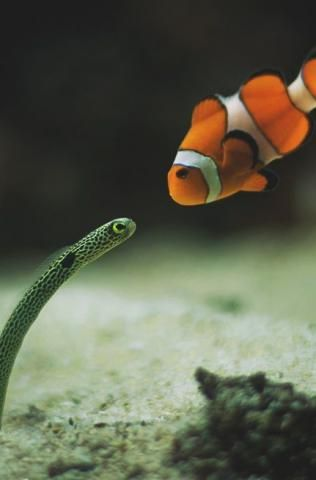 PetsLady's Pick: Cute Fishy Conversation Of The Day...see more at PetsLady.com -The FUN site for Animal Lovers