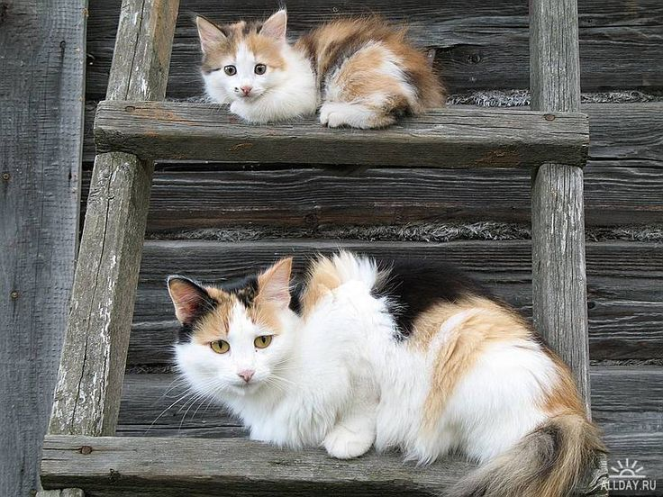 Image result for baby and mother cat