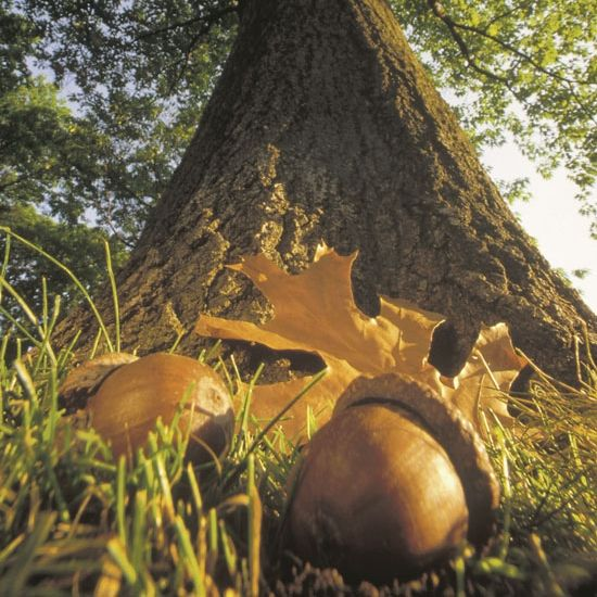 The Acorn and the Tree — Gumption