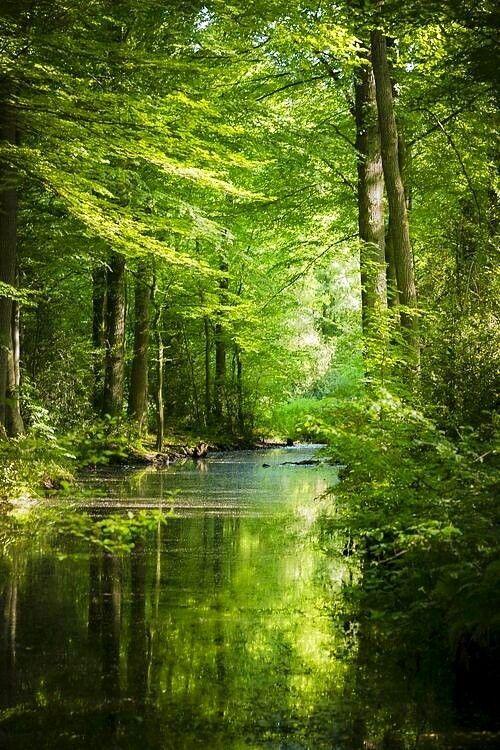 Grüne Schönheit im Wald. Wenn es um Gunst geht … – #beauty #favori #Green #woodland #woods