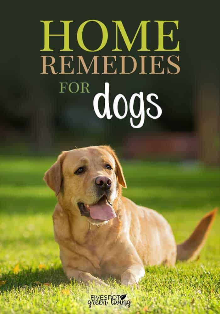 5 Effective Home Remedies For Dogs Allergies Dog Allergies Dog Skin Allergies Medication For Dogs
