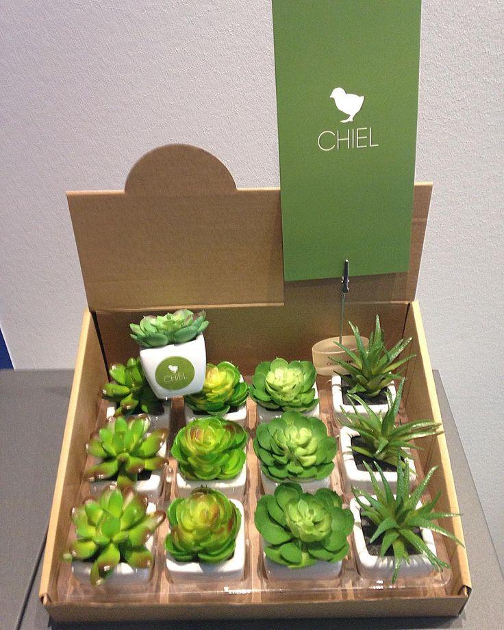 Kunst vet plantjes inclusief presentatiedoos (vanaf 12 stuks) bij easypeas.be
