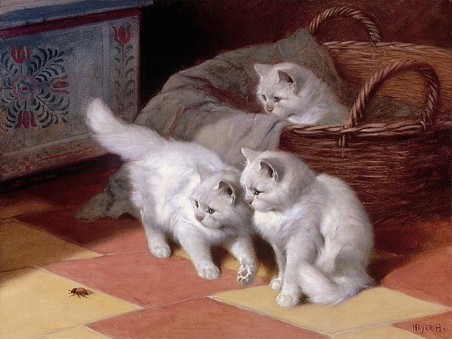 Three White Persian Cats Watching a Bug Private Collection