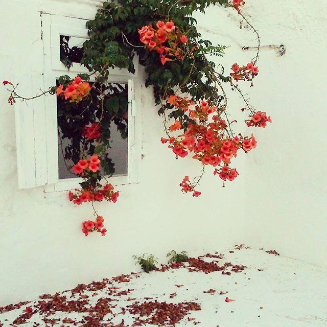 barefoot duchess - a personal style blog: Elafonisos Island // Photo Diary