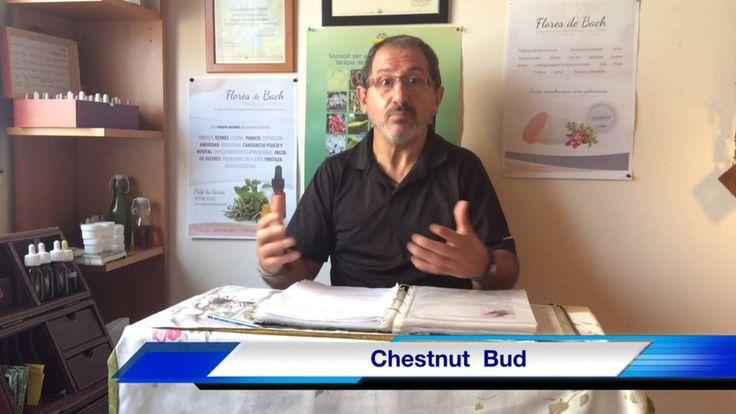 Flores de Bach para el Estudio y Aprendizaje - Chestnut Bud - 1 de 12