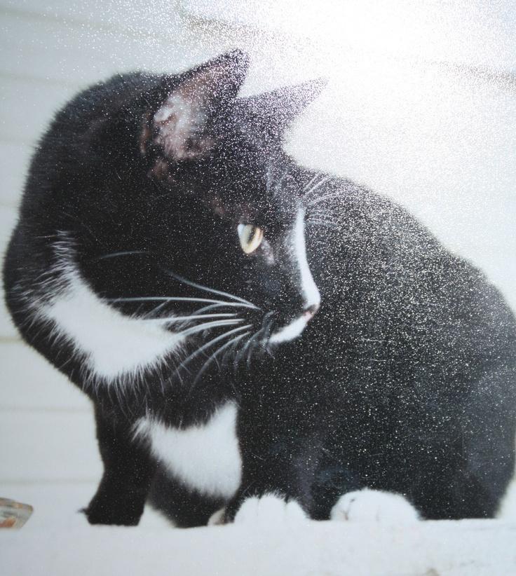 Pandora was the other cat. Pandora was a boy cat.