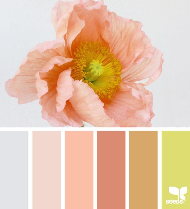 { color flora } image via: @heather_page #color #palette #colorpalette #pallet #colour #colourpalette #design #seeds #designseeds