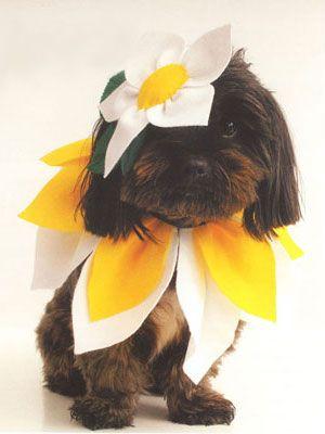 Flower dog Halloween costume- adorable!