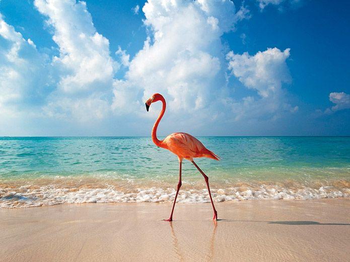 Repubblica Dominicana: la magia della vacanza caraibica. Agosto 2015, ed è tempo di ferie e vacanze. Per chi decide di...