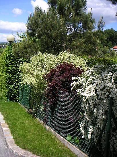 Große freiwachsende Hecke - Input gesucht! - Seite 1 - Gartengestaltung - Mein schöner Garten online