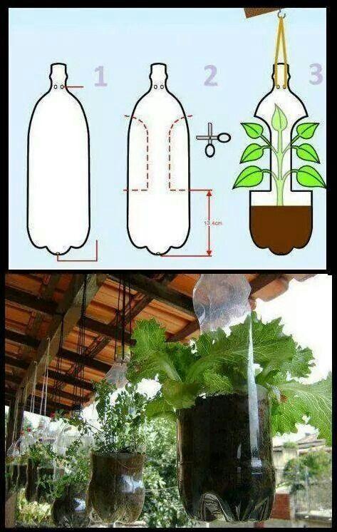 Soft drink bottle pot plant holders.