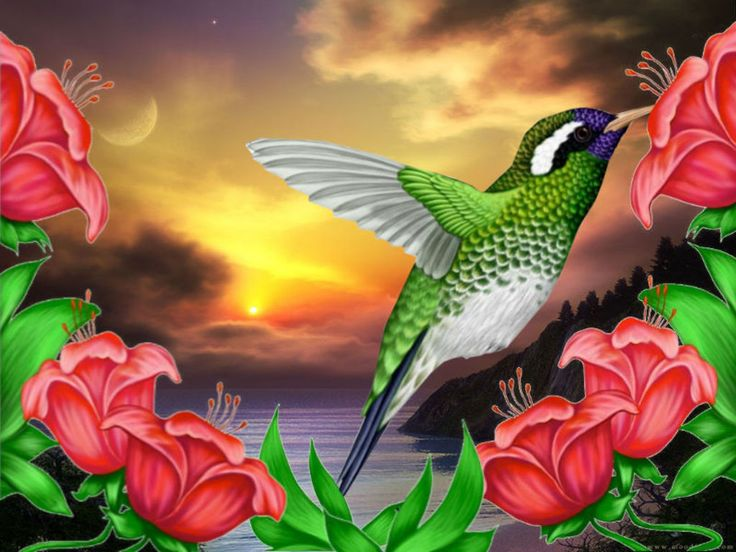 Download Free Hummingbird Wallpapers: Free Hummingbird Wallpaper - Download