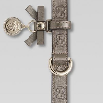 Gucci designer dog collar
