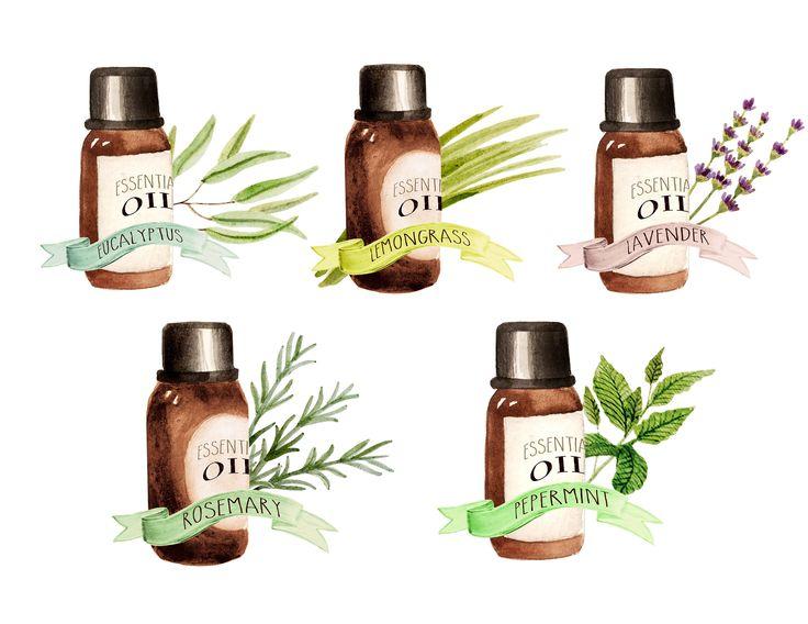 Essential oils clipart herbs clipart watercolor botanicals