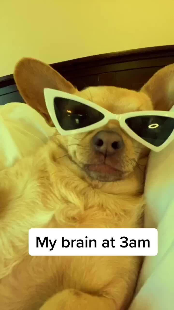 Pin By Kara Heath On Hahaha Cute Memes Funny Animal Memes Funny Animal Pictures