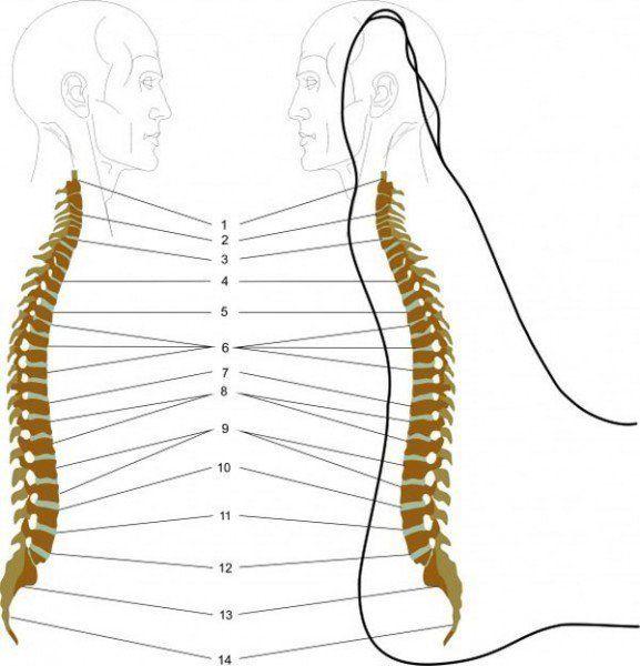 Saviez-vous que vous pouvez localiser les points de la colonne vertébrale sur le bord de votre pied? C'est la zone où tous les problèmes de dos sont projetés et sont situés sous des formes « point-douleur ». En massant vos pieds, vous serez en mesure de vous débarrasser des maux de dos, de la tension et de …