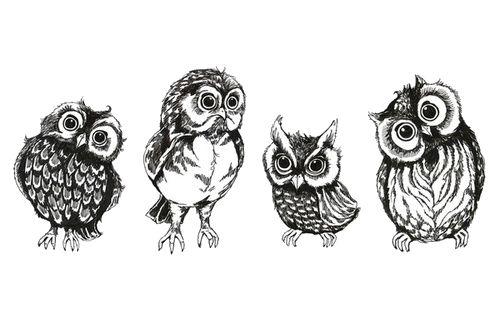 drawing art cute birds owls transparent cute owls owl ...