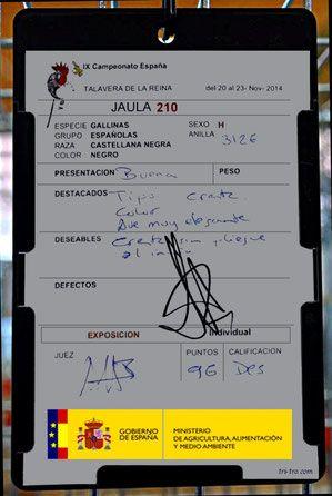 Plantilla correspondiente a la Gallina Castellana negra ganadora del Campeonato de España 2014