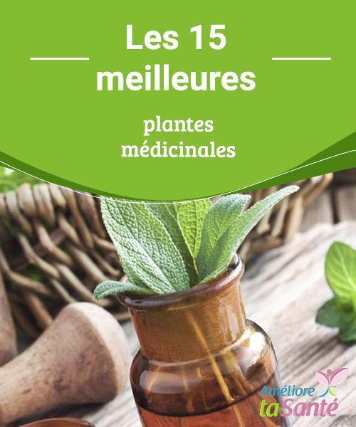 Les 15 #meilleures plantes médicinales   Vous aimeriez vous soigner par les #plantes ? Venez découvrir les 15 meilleures plantes #médicinales pour prendre soin de vous au quotidien !