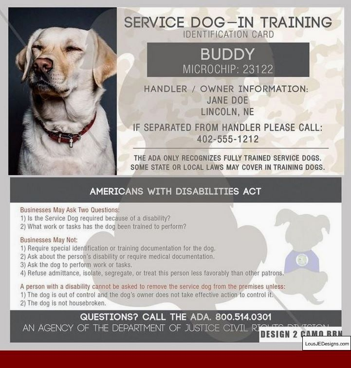 How To Train A Psychiatric Service Dog And Pics Of Training A Big
