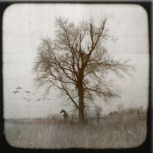 Beautiful horse, lovely tree & oh the birds in flight with pic in  a sepia tone ~ Bellissimo <3