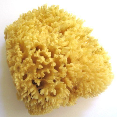 """Natural Wool Sea Sponge - Luxurious, Traditional & most popular - 5"""" Dia by Unknown. $11.00"""