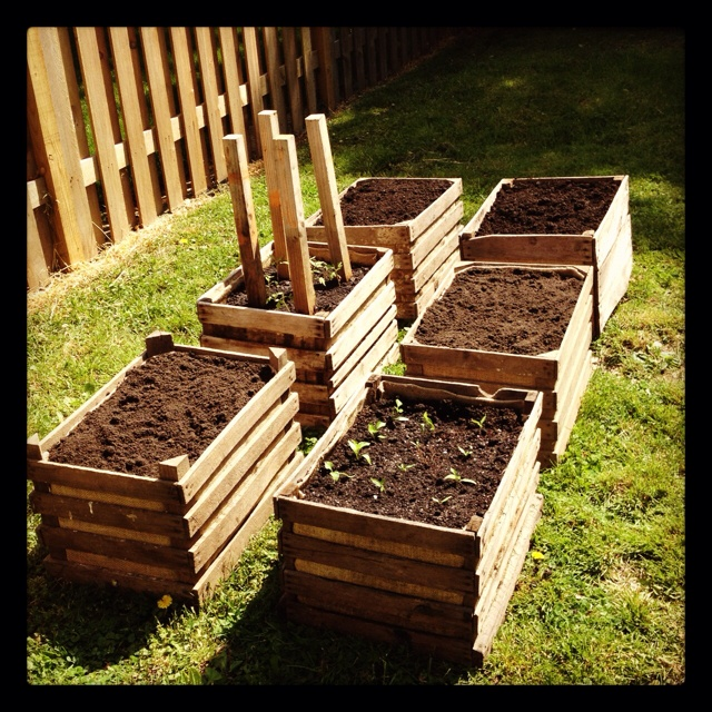 vegetable garden in wooden crates garden pinterest