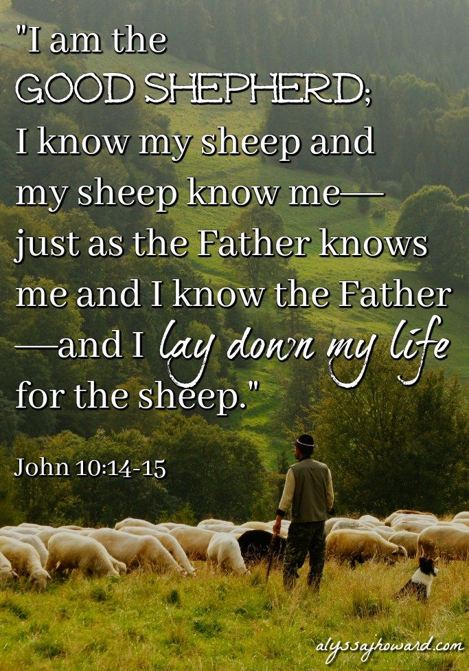 "Today, we throw around the term ""false teacher"" quite a bit. Many of us live in fear of being led astray. But the truth is that we have a promise from Jesus that His sheep know His voice. Not only that, but we can clearly identify the voice of a stranger. (John 10:1-16)"
