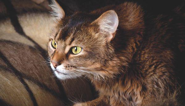 Un gatto spaventato non è semplice da avvicinare. Ecco alcuni semplici e utili suggerimenti per avere un contatto con lui e poterlo accarezzare senza traumi