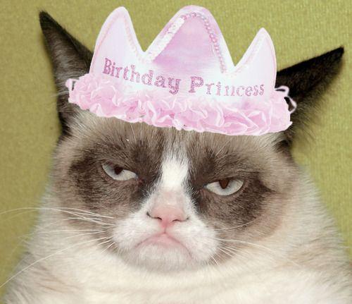 Tardar Sauce The Birthday Princess!! #GrumpyCat #Grumpy
