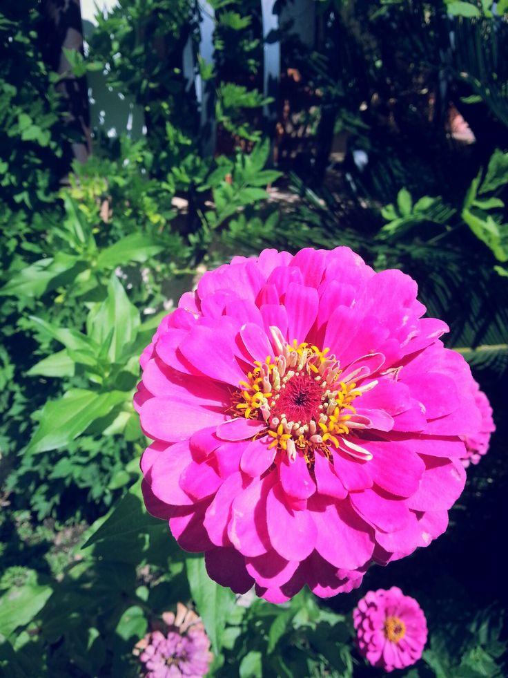 Flower. Flower power. Flower porn. Fuxia. Garden. Fiore. La magia dei fiori. Fuxia. Photo by me, AngelaRizzo.