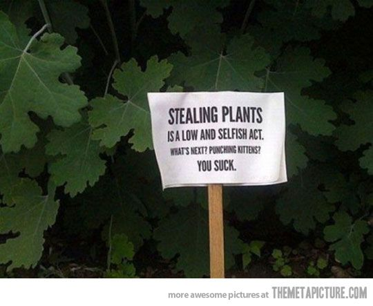 Stealing plants... You suck.