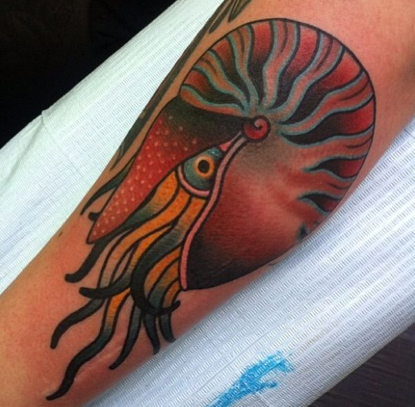 Ashley Love - Colorful nautilus tattoo done at New York Adorned.