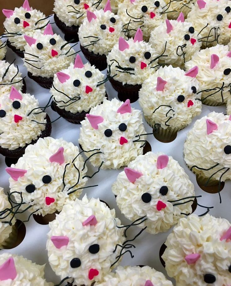 Cat Cupcakes Food Amp Drinks Pinterest Cat Cake And