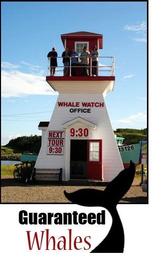 Guaranteed Whales Pleasant Bay, Nova Scotia. Formally Wesley's Whale Watching on the Cabot Trail, Cape Breton Nova Scotia