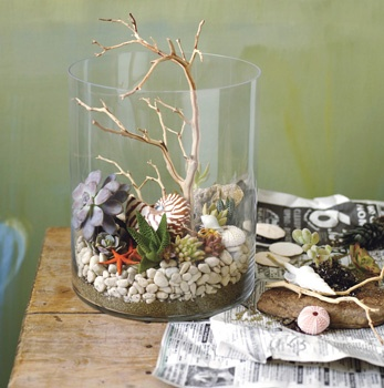 succulent with shells