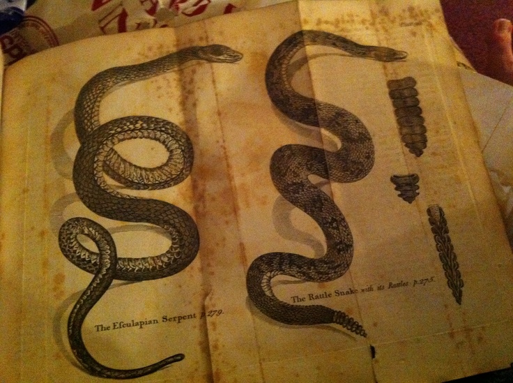 From Buffon's Natural History 1792, here is a pull out page of a snake, one being descriped as near life size.
