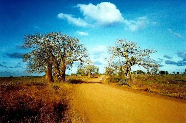 L'africa con Terre nel Cuore e' disegnata coi colori della vita! www.terrenelcuore.it