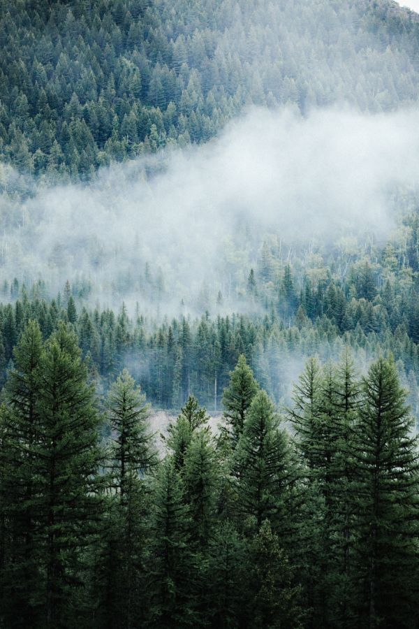 There Are More Than 1 Billion Rural People That Depend On Forests