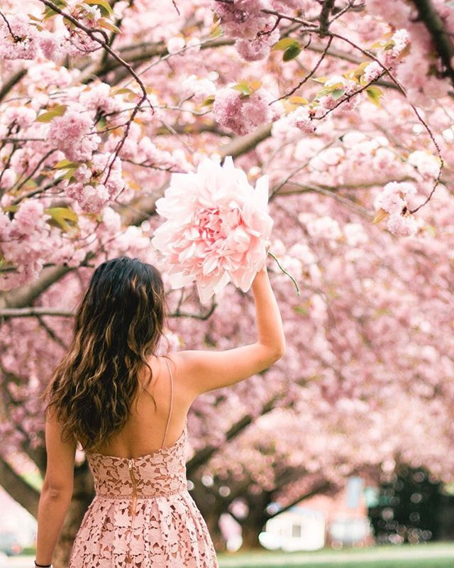 Its Cherry Blossom Season In Dc Definitely One Of My Favorite Times Of The Year The Nationalpa Cherry Blossom Season Washington Dc Travel Explore America