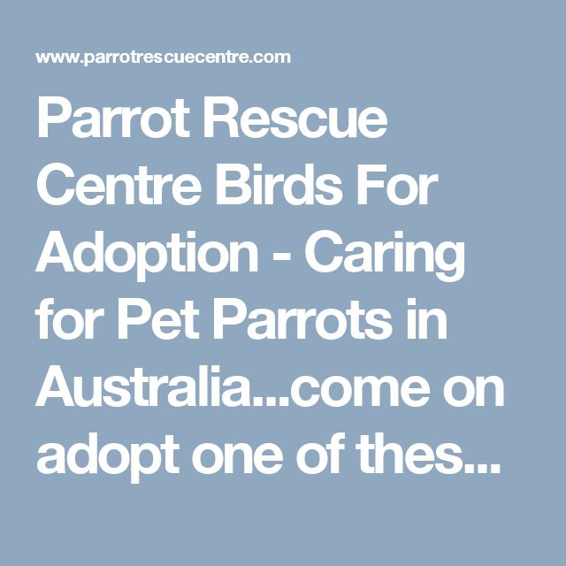 Parrot Rescue Centre Birds For Adoption - Caring for Pet Parrots in Australia...come on adopt one of these cuties