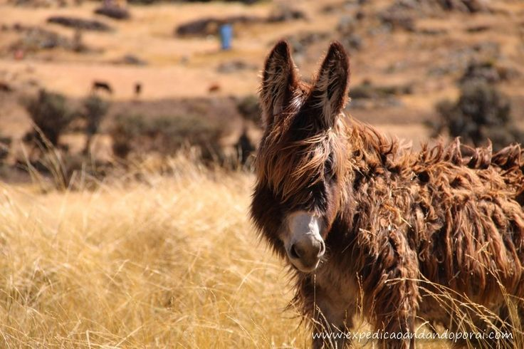 Dread Donkey by Carla Nogueira on 500px